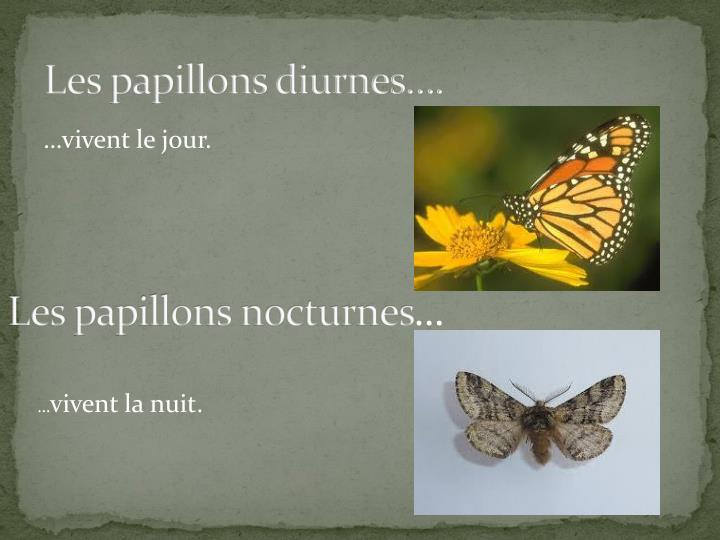 Les papillons diurnes….