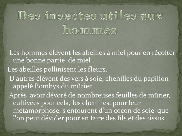 Des insectes utiles aux hommes