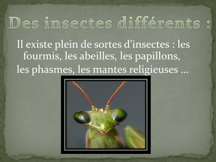 Des insectes d