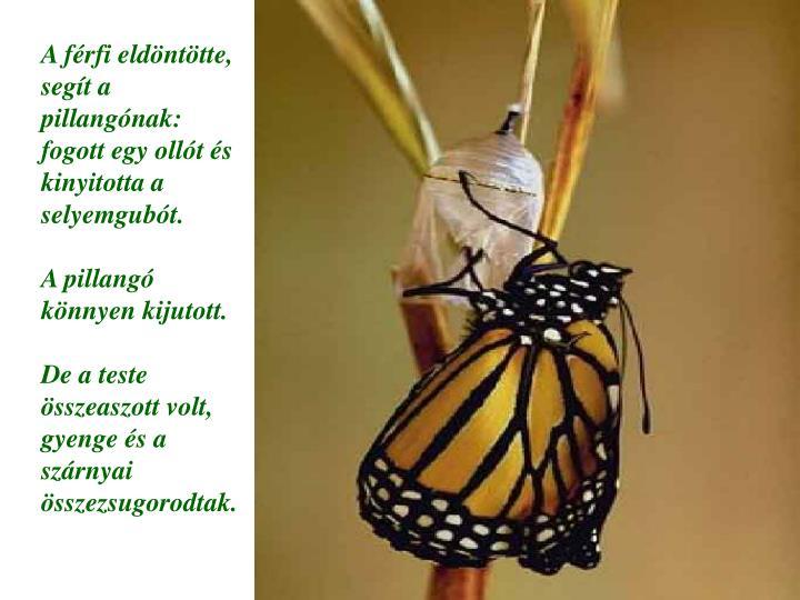 A férfi eldöntötte, segít a pillangónak: fogott egy ollót és kinyitotta a selyemgubót.