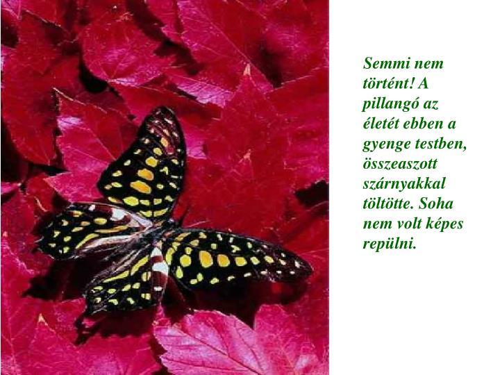 Semmi nem történt! A pillangó az életét ebben a gyenge testben, összeaszott szárnyakkal töltötte. Soha nem volt képes repülni.