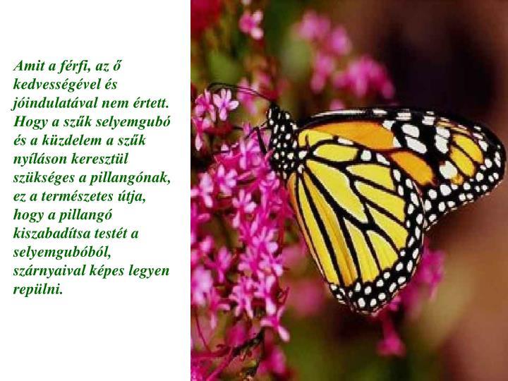 Amit a férfi, az ő kedvességével és jóindulatával nem értett. Hogy a szűk selyemgubó és a küzdelem a szűk nyíláson keresztül szükséges a pillangónak, ez a természetes útja, hogy a pillangó kiszabadítsa testét a selyemgubóból, szárnyaival képes legyen repülni.