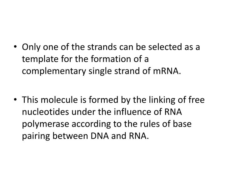Only one of the strands can be selected as a template for the formation of a complementary single strand of mRNA.