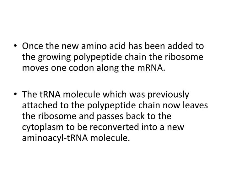 Once the new amino acid has been added to the growing polypeptide chain the ribosome moves one