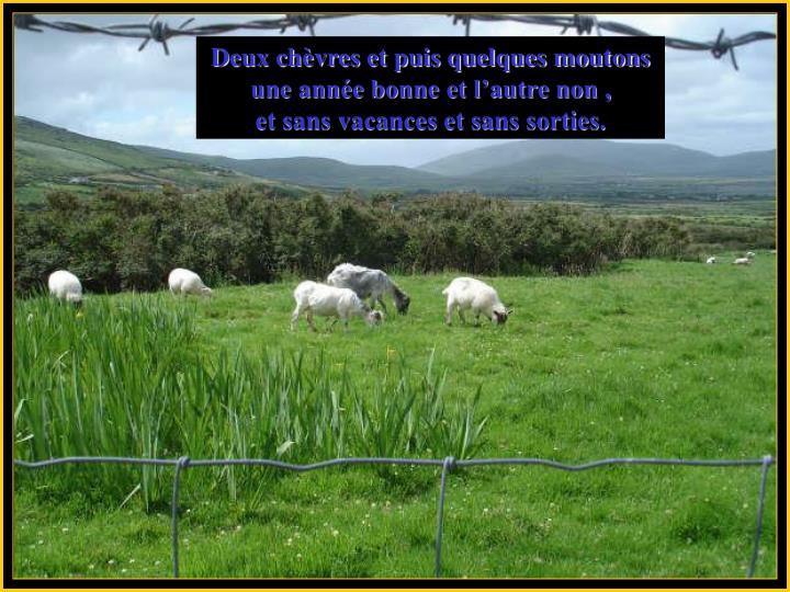 Deux chèvres et puis quelques moutons
