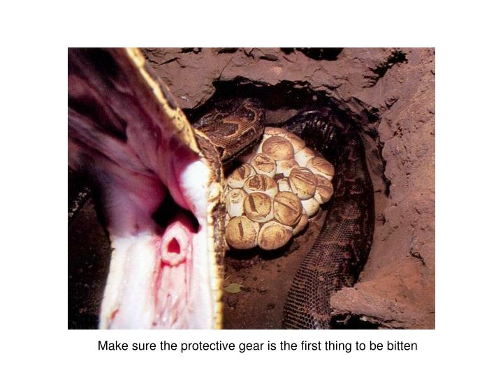 Make sure the protective gear is the first thing to be bitten
