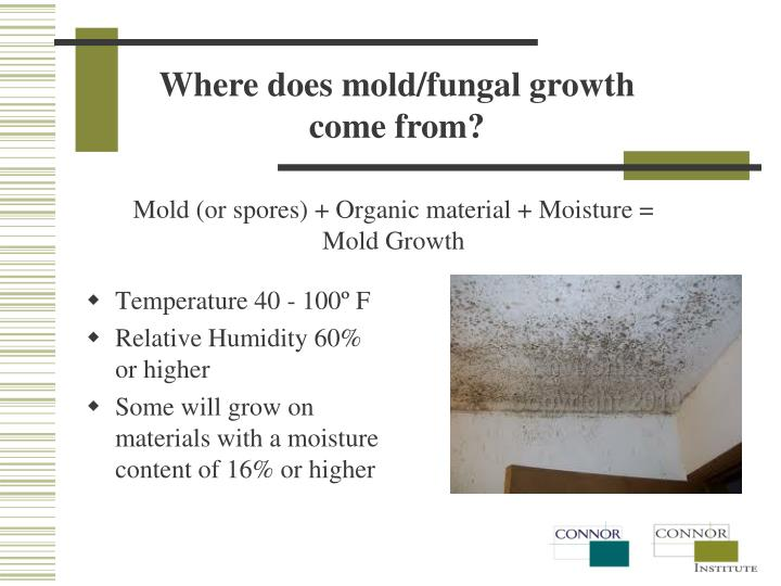 Where does mold/fungal growth come from?