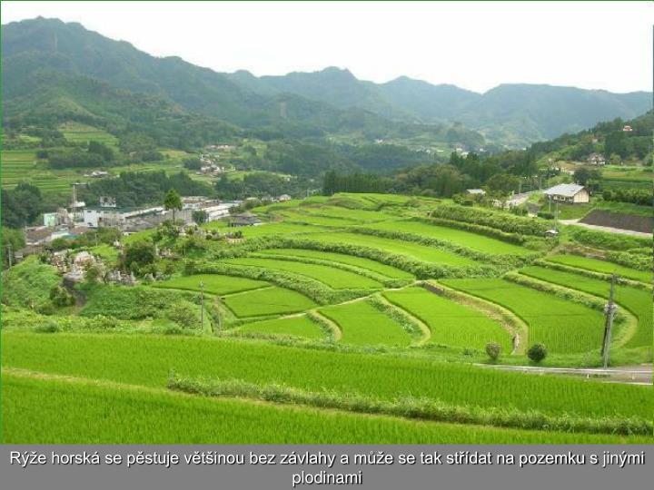 Rýže horská se pěstuje většinou bez závlahy a může se tak střídat na pozemku sjinými plodinami
