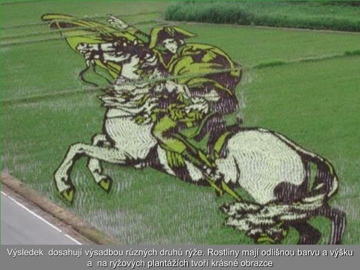 Výsledek  dosahují výsadbou různých druhů rýže. Rostliny mají odlišnou barvu a výšku a  na rýžových plantážích