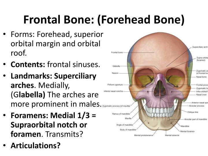 Ppt The Skull I Powerpoint Presentation Id 5259261
