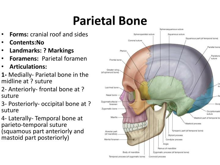 PPT - The Skull I PowerPoint Presentation - ID:5259261