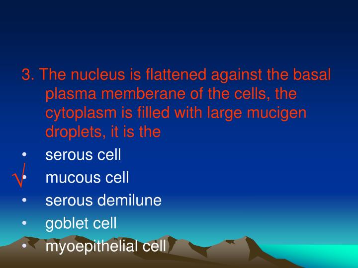 3. The nucleus is flattened against the basal plasma memberane of the cells, the cytoplasm is filled with large mucigen droplets, it is the