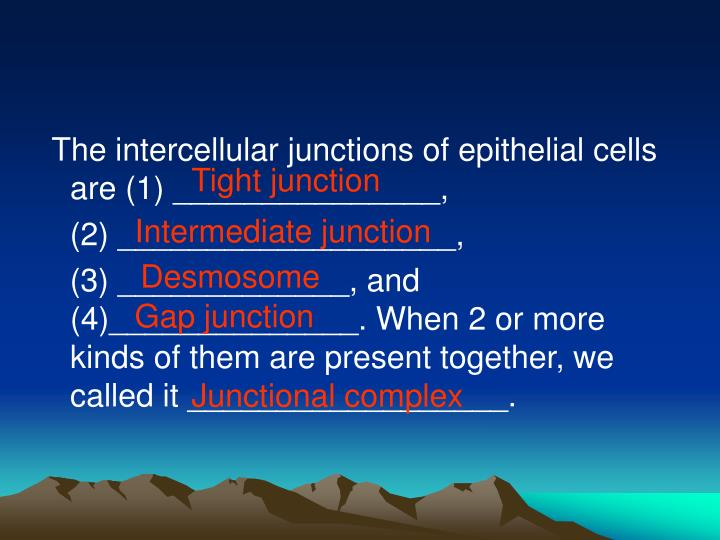 The intercellular junctions of epithelial cells are (1) _______________,
