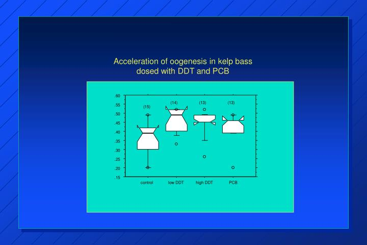 Acceleration of oogenesis in kelp bass