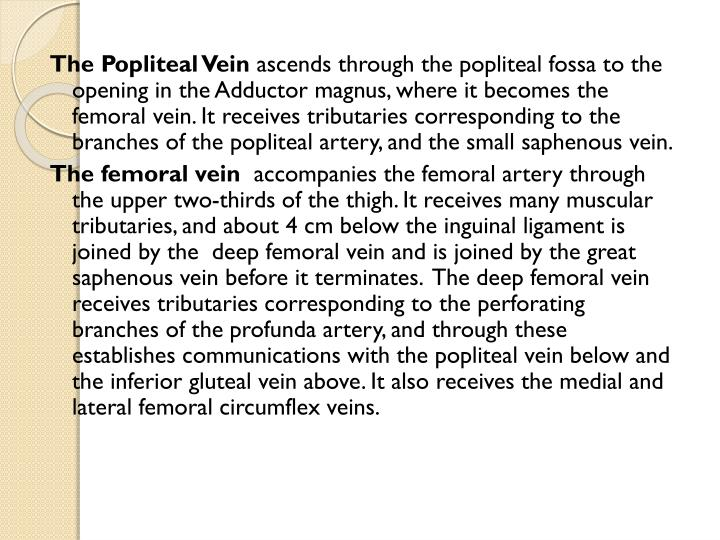 The Popliteal Vein