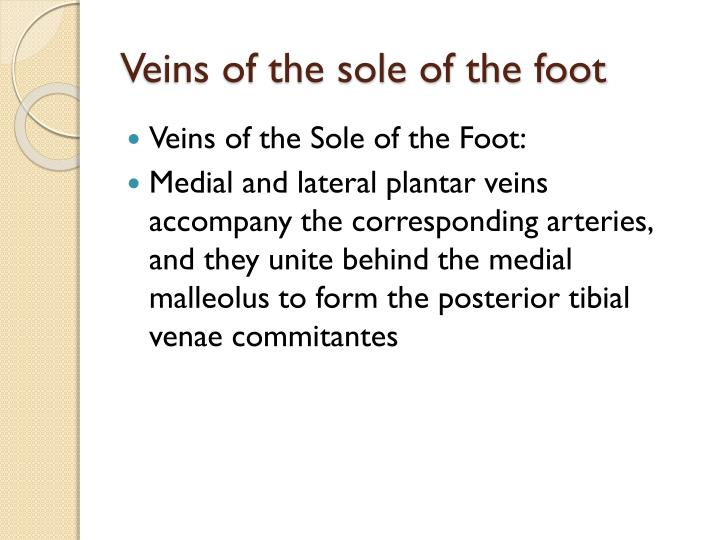 Veins of the sole of the foot