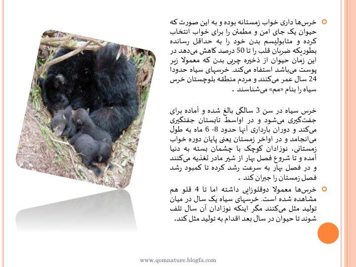 خرسها داری خواب زمستانه بوده و به این صورت که حیوان یک جای امن و مطمئن را برای خواب انتخاب کرده و متابولیسم بدن خود را به حداقل رسانده بطوریکه ضربان قلب را تا 50 درصد کاهش میدهد در این زمان حیوان از ذخیره چربی بدن که معمولا زیر پوست میباشد استفاه میکند. خرسهای سیاه حدودا 24 سال عمر میکنند و مردم منطقه بلوچستان خرس سیاه را بنام «مم» میشناسند