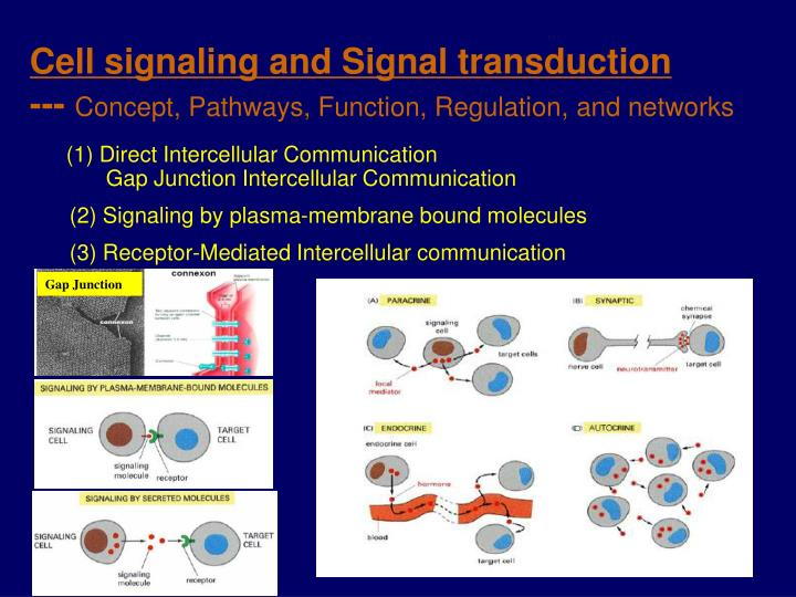 Cell signaling and signal transduction concept pathways function regulation and networks
