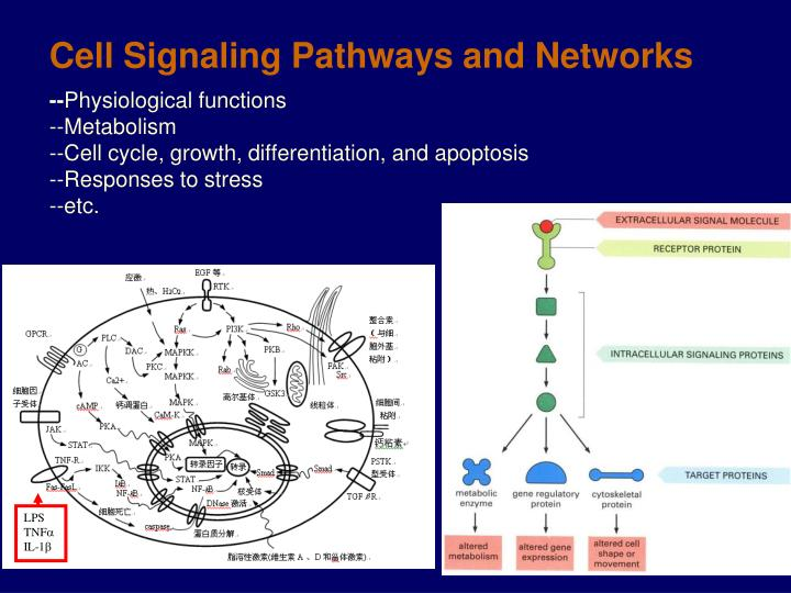 Cell Signaling Pathways and Networks
