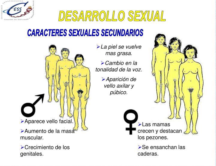 DESARROLLO SEXUAL
