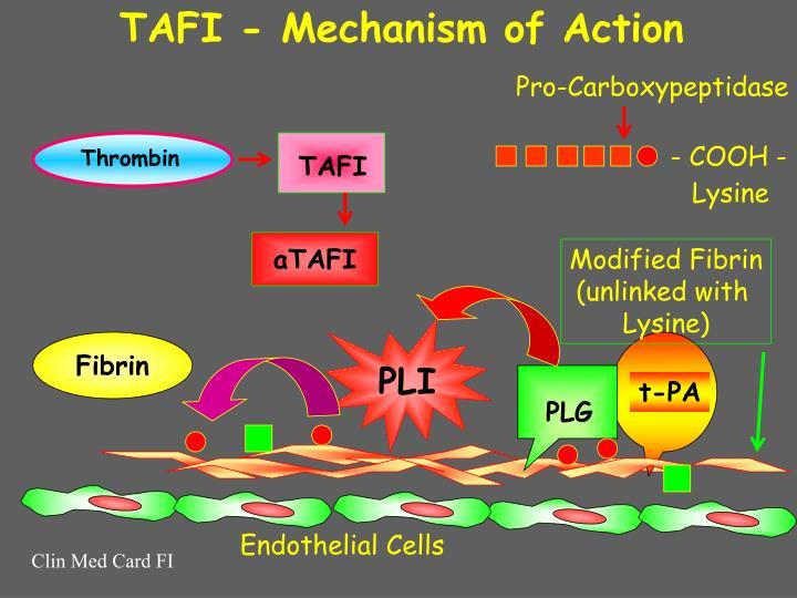TAFI - Mechanism of Action