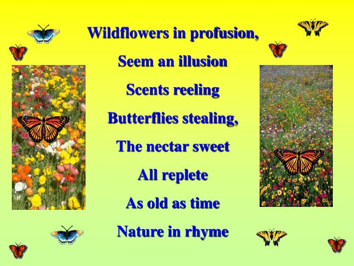 Wildflowers in profusion,