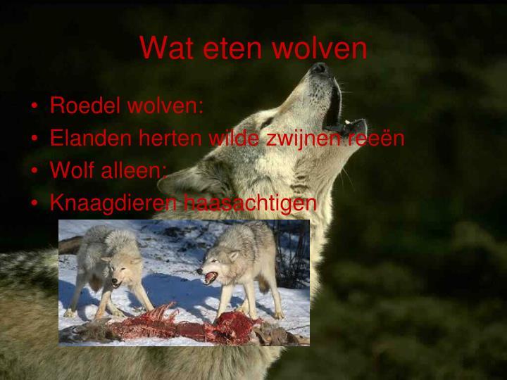 Wat eten wolven
