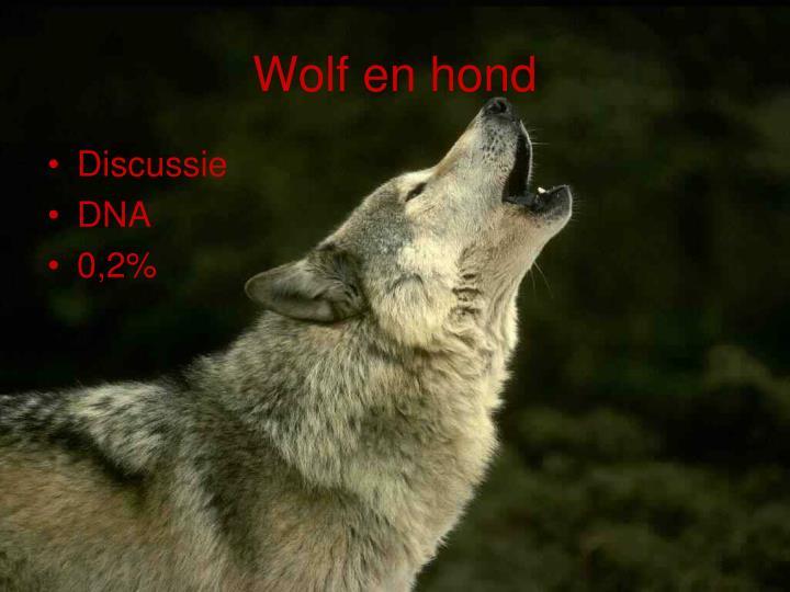 Wolf en hond