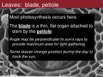 leaves blade petiole