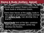 stems buds axillary apical