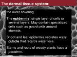 the dermal tissue system