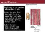 vessel elements