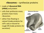 ribosomes synthesize proteins