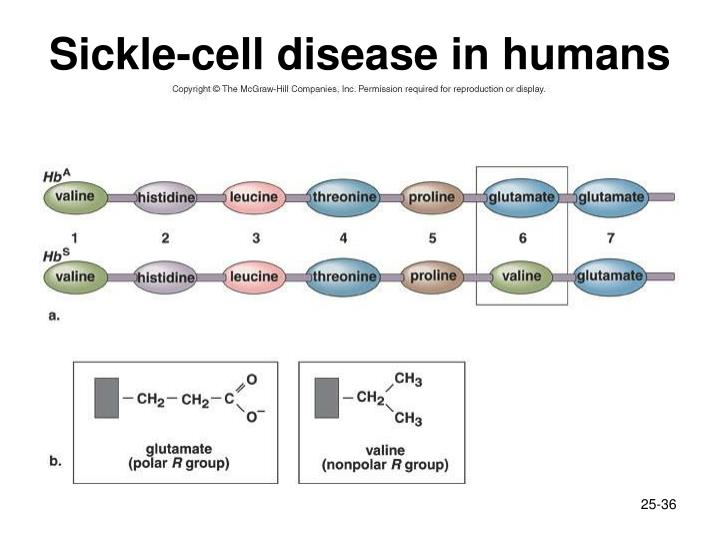 Sickle-cell disease in humans