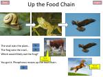 up the food chain