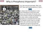 why is phosphorus important3
