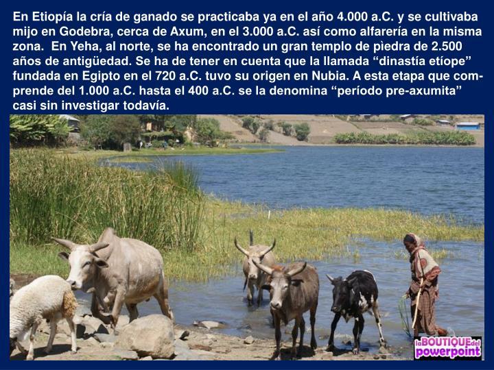 """En Etiopía la cría de ganado se practicaba ya en el año 4.000 a.C. y se cultivaba mijo en Godebra, cerca de Axum, en el 3.000 a.C. así como alfarería en la misma zona.  En Yeha, al norte, se ha encontrado un gran templo de pìedra de 2.500 años de antigüedad. Se ha de tener en cuenta que la llamada """"dinastía etíope"""" fundada en Egipto en el 720 a.C. tuvo su origen en Nubia. A esta etapa que com-prende del 1.000 a.C. hasta el 400 a.C. se la denomina """"período pre-axumita"""" casi sin investigar todavía."""
