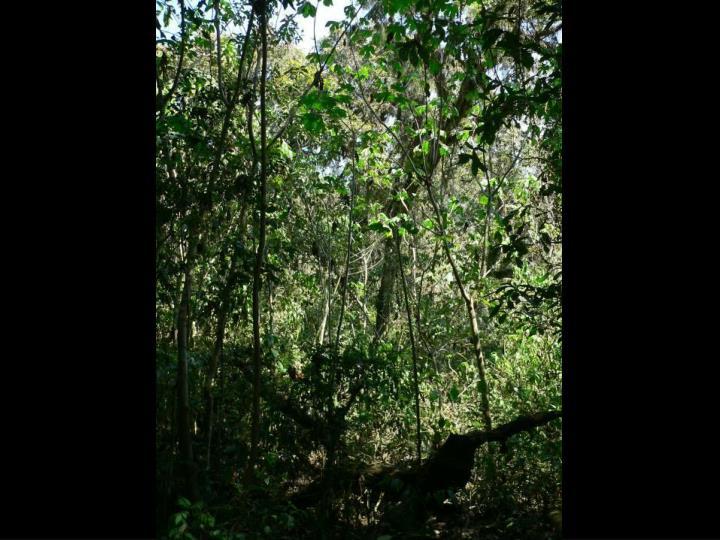 El cielo mosi stations 2006 k wilcox part1