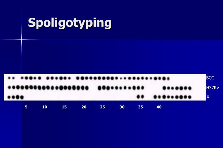 Spoligotyping