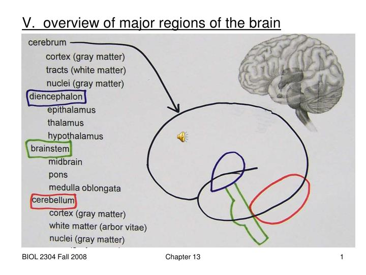 an overview of the brain structure and the role of hypothalamus Assignment detailing the role of the thalamus and hypothalamus the hypothalamus is a complex structure documents similar to role of thalamus and hypothalamus.