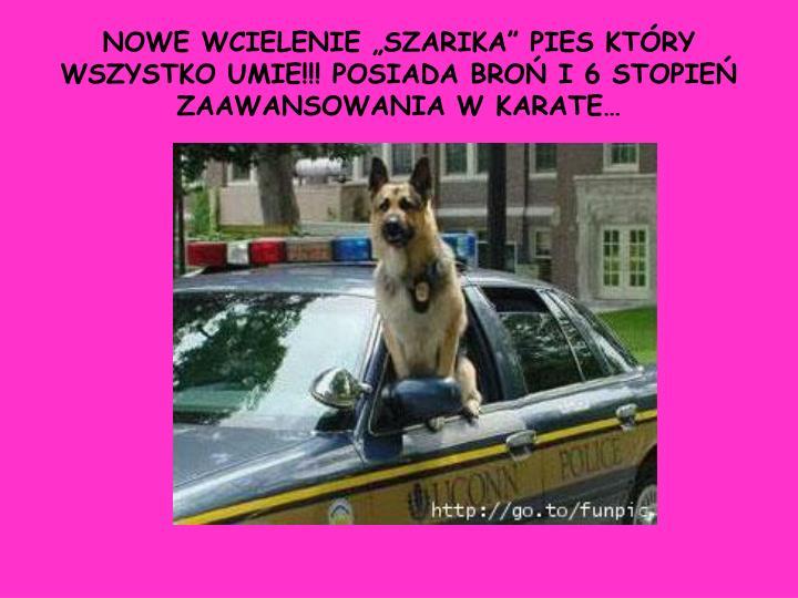 """NOWE WCIELENIE """"SZARIKA"""" PIES KTÓRY WSZYSTKO UMIE!!! POSIADA BROŃ I 6 STOPIEŃ ZAAWANSOWANIA W KARATE…"""