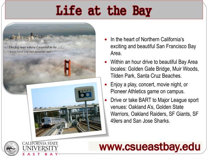 Life at the bay