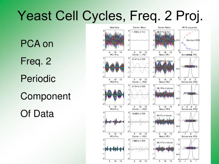 Yeast cell cycles freq 2 proj