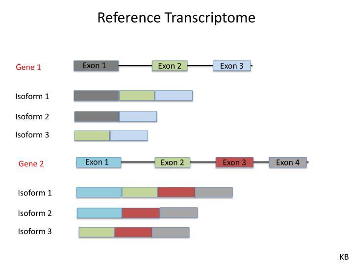 Reference Transcriptome