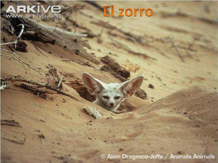 El zorro