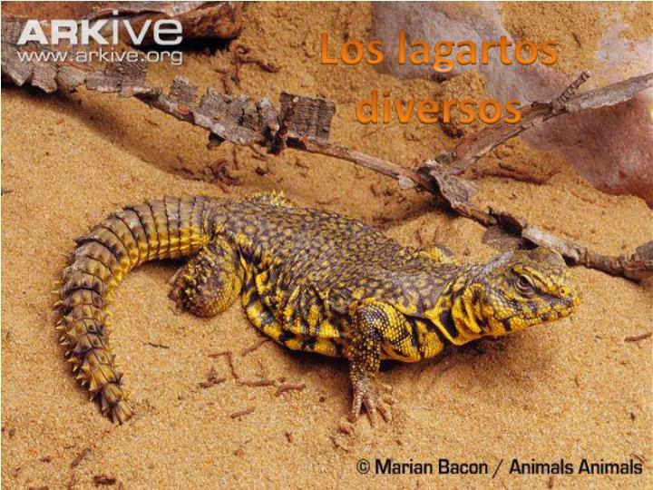 Los lagartos diversos