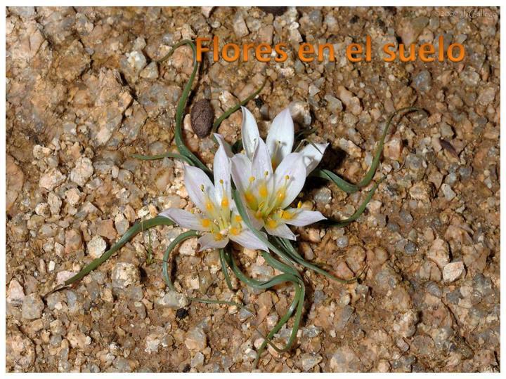 Flores en el suelo