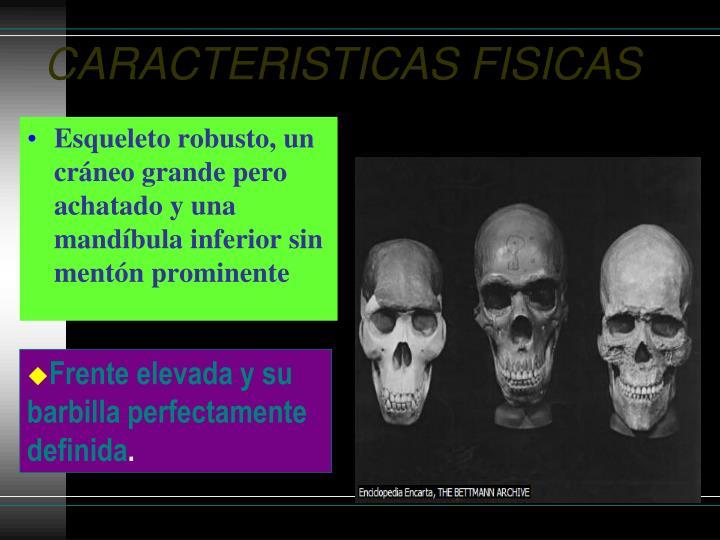 CARACTERISTICAS FISICAS
