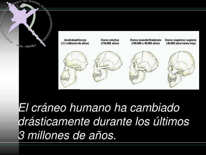 El cráneo humano ha cambiado drásticamente durante los últimos 3 millones de años.