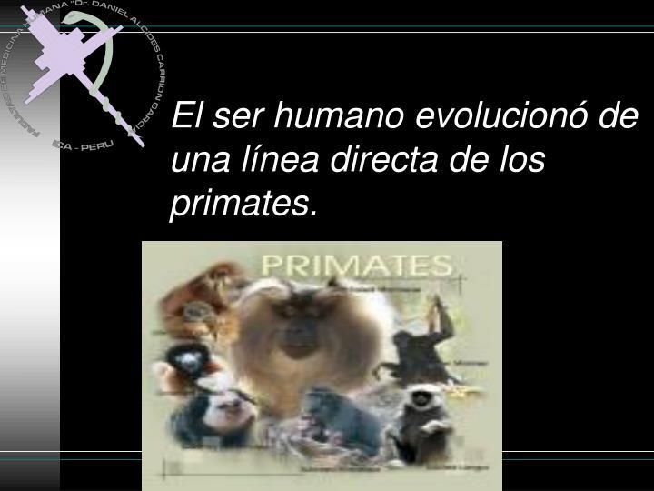 El ser humano evolucionó de una línea directa de los primates.